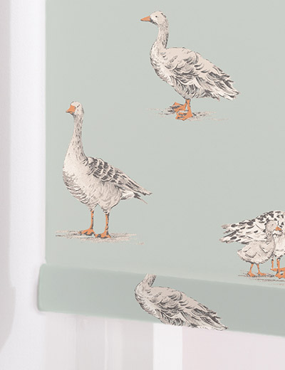 geese duckegg
